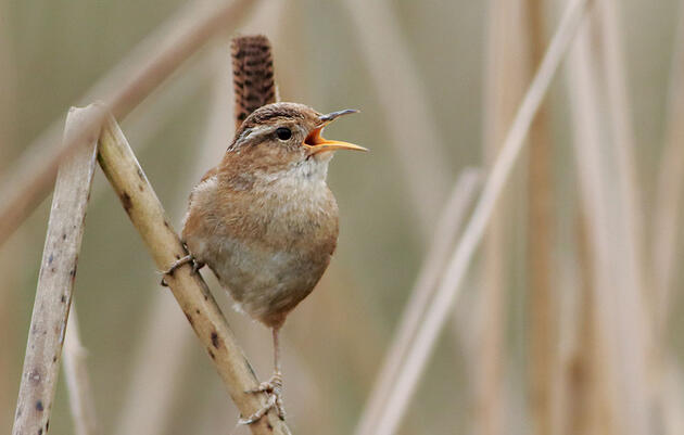 How a Bird's Habitat Influences Its Song