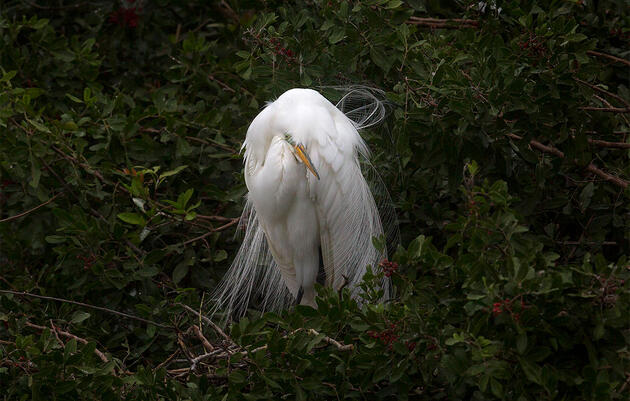 If the Feds Won't Prohibit Preventable Bird Deaths, More States Might