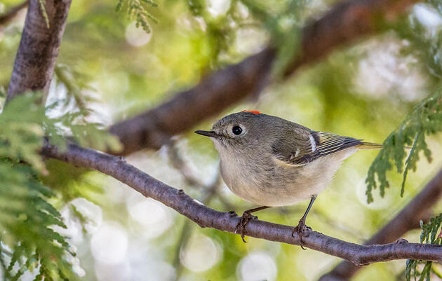 Spring Bird Migration and the Indigenous Stewardship That Sustains It