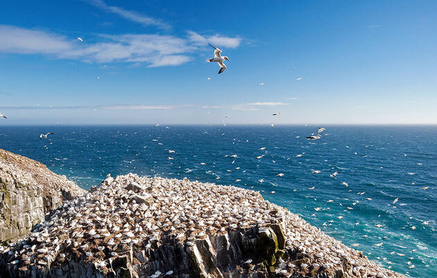 The Best Places to See Seabirds Without Getting on a Boat