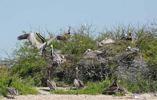 Scenes From the Texas Coast, Where Nesting Birds Abound