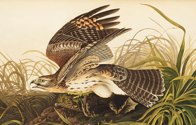 A Rare Copy of Audubon's 'Birds of America' Heads to Auction to Benefit Conservation
