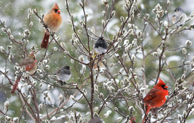 It's Almost Time for the Great Backyard Bird Count