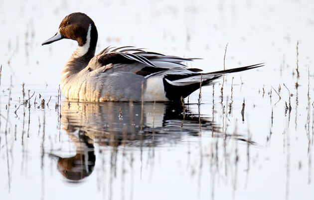 Audubon to White House: And What's Your Plan?