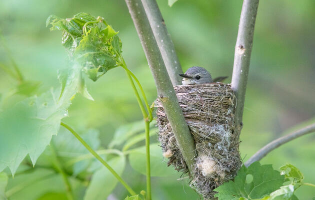 Birdist Rule #28: Know When Birds Think You're Too Close to Their Nests
