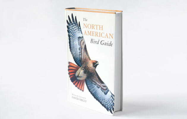 Sibley Field Guides