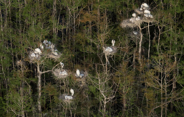 Last Year's Everglades Breeding Bonanza Was the Biggest in More Than 80 Years