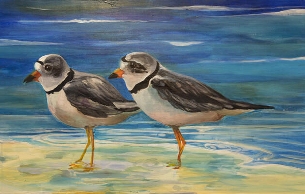Piping Plover by Colleen Smith