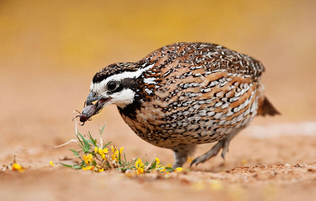 Here Are Twelve Photos of Hungry Birds and Their Meals