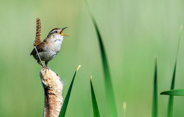 How to Compose the Perfect Bird Photo