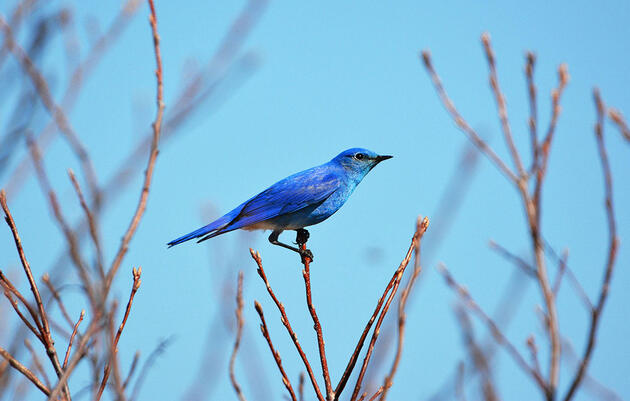 Audubon Volunteers Are Counting Bluebirds and Nuthatches to Better Understand Climate Change