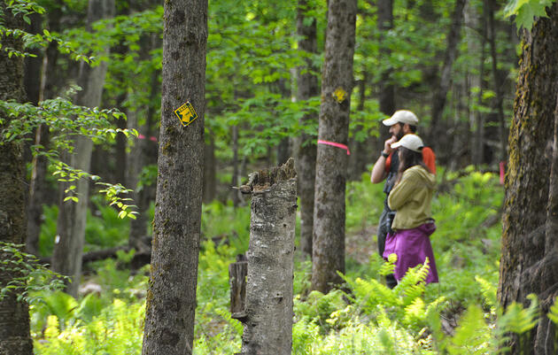 With Songbird Populations Declining, Vermont Seeks to Keep Its Forests Intact