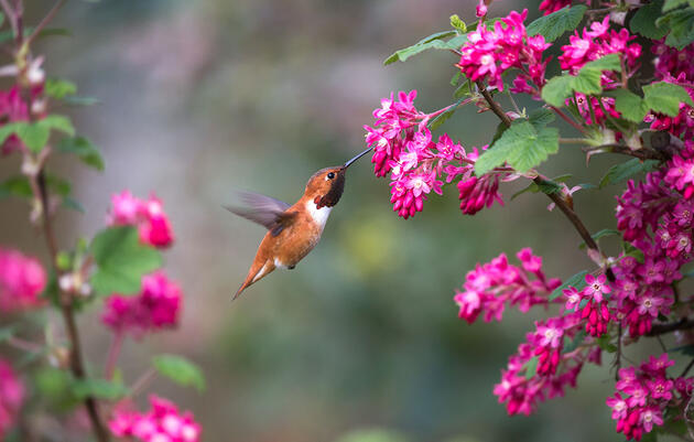 This Spring, Help Birds by Growing Native Plants