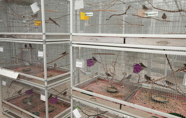 Two Widely Used Pesticides Found to Disorient and Sicken Migrating Songbirds