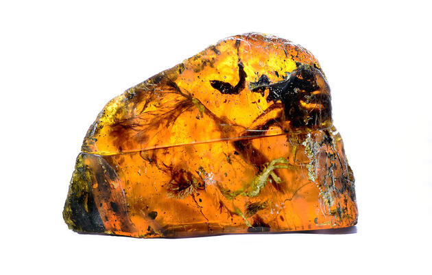See an Ancient Baby Bird Beautifully Encased in Amber