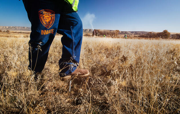 Meet the Inmates Working to Rebuild the Greater Sage-Grouse's Home