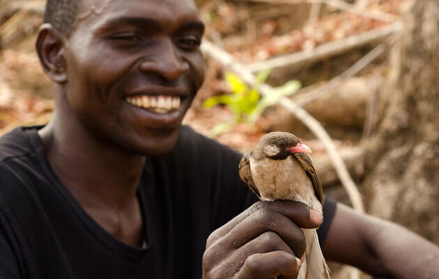 Meet the Greater Honeyguide, the Bird That Understands Humans