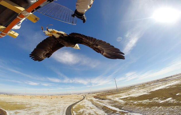 Will Wind Turbines Ever Be Safe For Birds?