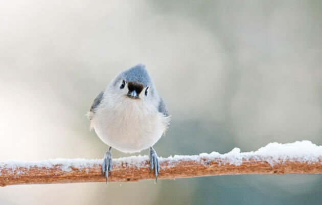 Gimme Shelter: How Do Birds Survive A Snow Storm?