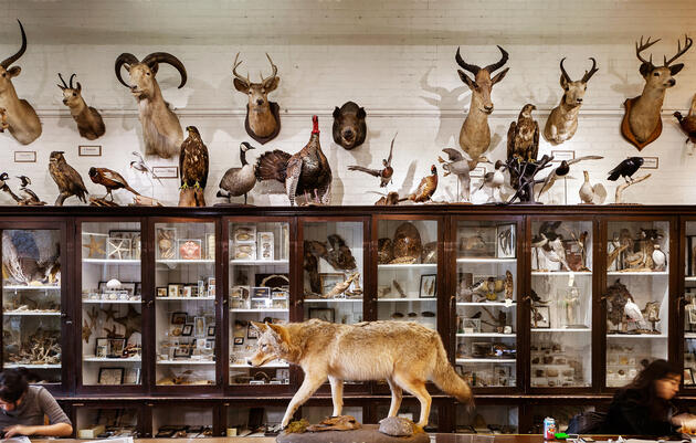 Skeleton Crew: The Bones and Bodies Behind RISD's Nature Lab
