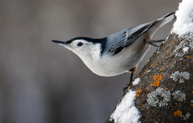 Activities During the Great Backyard Bird Count