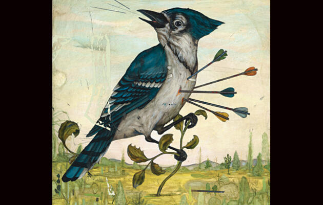 Slings and Arrows: Why Birders Love to Hate Blue Jays