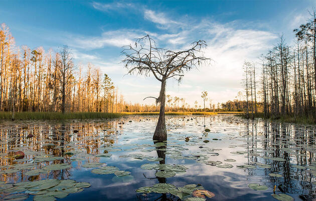 Proposed Georgia Mine Next to Okefenokee Swamp Raises Alarms