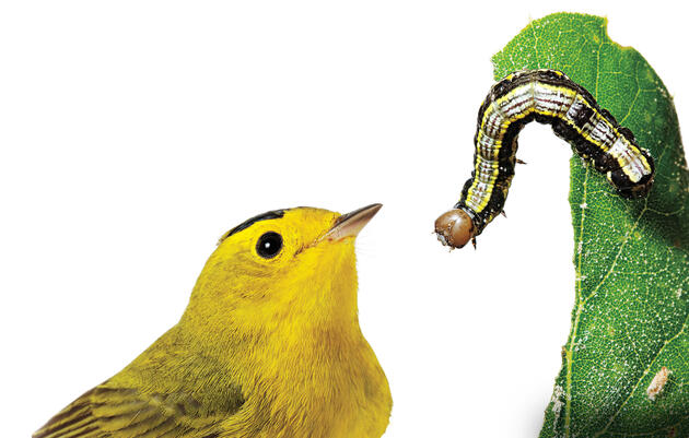 How to Create a Bird-Friendly Yard