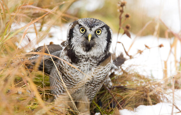 Let a Pro Teach You How to Take Great Owl Photos