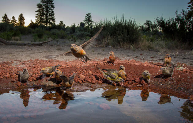 Secret Pools in the Oregon Desert Are Magnets for All Kinds of Thirsty Animals