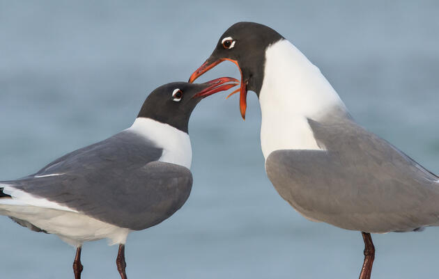 Seagull or Gull: Who Really Cares?