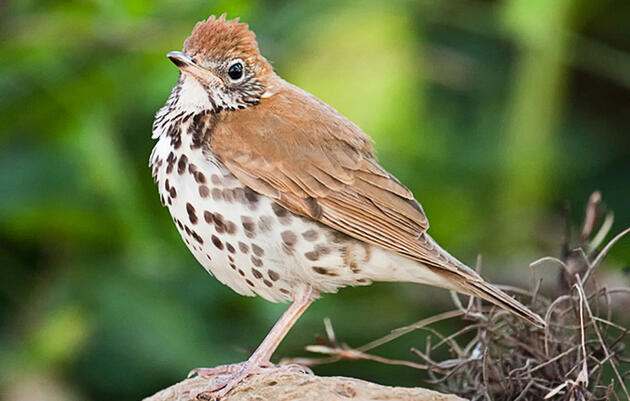 Thirty Percent of North American Bird Species Face Decline Across Seasons
