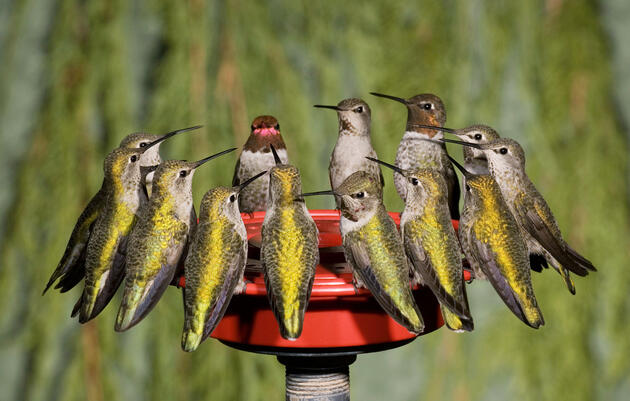 When to Expect Hummingbirds in Your Yard This Spring