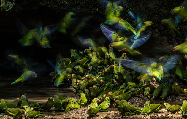 Enter the 2020 Audubon Photography Awards
