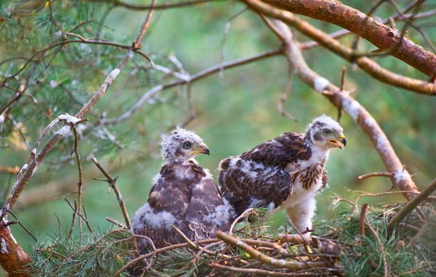 Six Things I Learned by Scoping Out Baby Birds and Their Parents