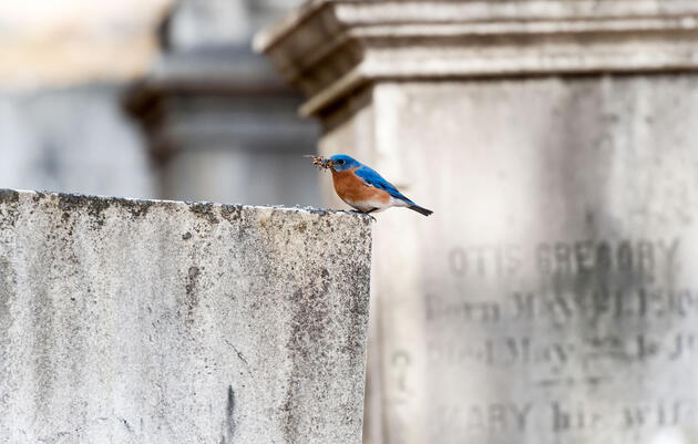 The Ins and Outs of Birding With the Dead