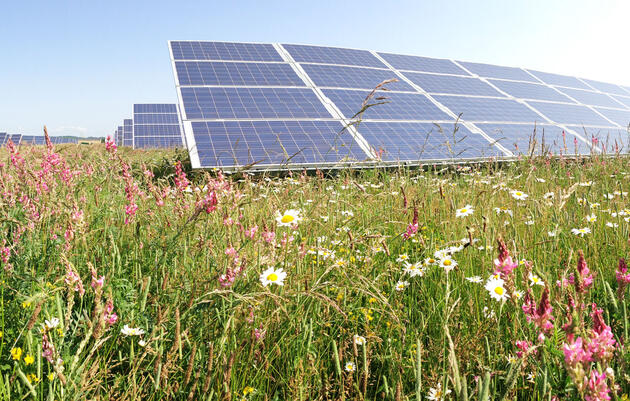 Can Solar Plants Make Good Bird Habitat?