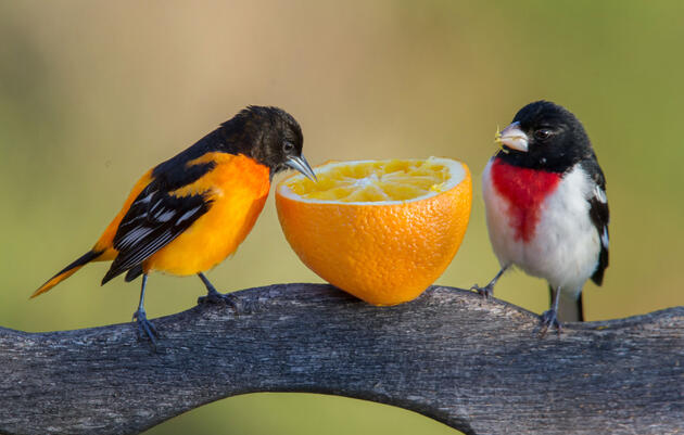 When It's Okay (or Not) to Feed Birds