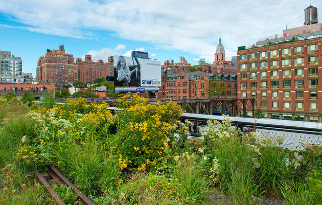 How Urban Landscapers Use Native Plants to Create Habitats for Wildlife