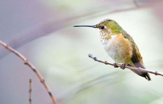 How to Take Exquisite Hummingbird Photos