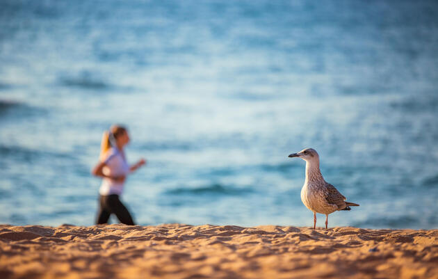 Four Reasons to Check Out the Birds While You Run