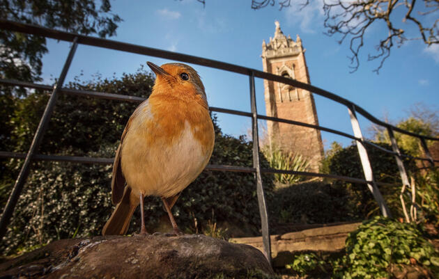 Check Out These Fantastic Photos of Birds in Urban Spaces