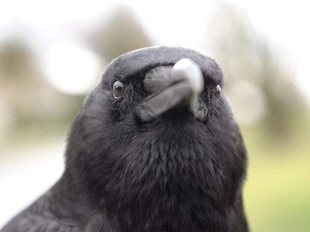 Watch: Short Film 'Canuck & I' Explores the Bond Between A Crow and His Human
