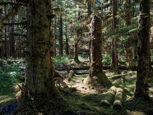 Likely Rollback of Roadless Rule Threatens Remaining Old Growth in Alaska's Tongass