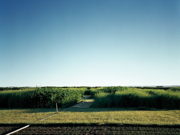 The Virtues of Switchgrass as an Alternative Fuel