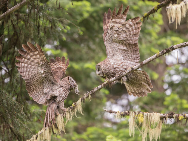 10 Spectacular Owl Photos You Have to See