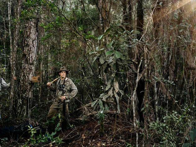 Can the Ivory-Billed Woodpecker Be Found in Cuba?