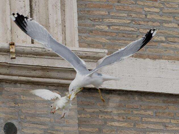 Why Birds Attacked the Pope's Peace Doves