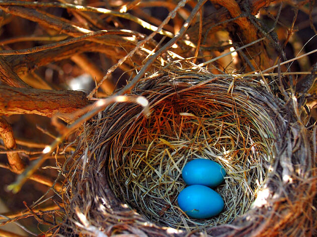 What It'd Take to Build a Human-sized Robin's Nest