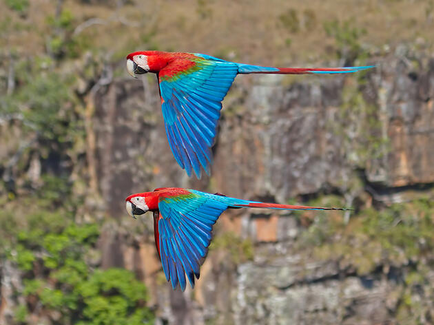 Photo of the Day: Red-and-Green Macaw